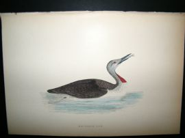 Morris 1870 Antique Hand Col Bird Print. Red- Throated Diver